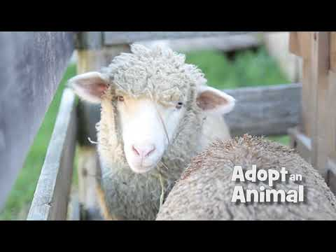 Adopt An Animal Of Old World Wisconsin