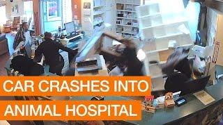Car Crashes into Animal Hospital
