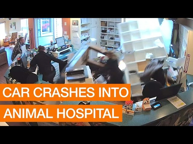 Car Crashes into Animal Hospital