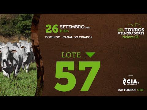 LOTE 57 - LEILÃO VIRTUAL DE TOUROS 2021 NELORE OL - CEIP