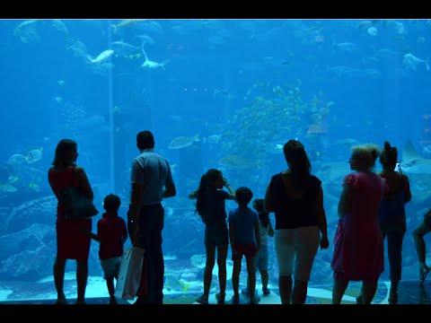The Lost Chambers Aquarium | Atlantis Hotel | Palm Jumeirah Dubai - United Arab Emirates
