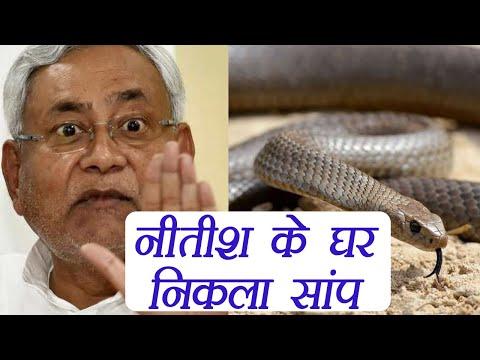 Nitish Kumar के घर पर निकला जहरीला सांप । वनइंडिया हिंदी