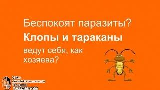 Уничтожение клопов и тараканов, дезинсекция, уничтожение насекомых,  +7 (495) 255-7-552(, 2017-02-28T13:37:40.000Z)