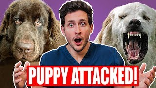 Download My Puppy Got ATTACKED! | Safest Way To Break Up a Dog Fight | Doctor Mike Mp3 and Videos