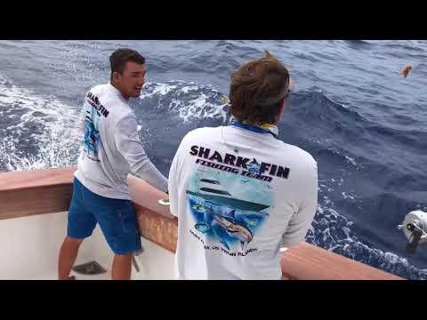 St Martin Tournament On Shark Fin Video Carey Chen