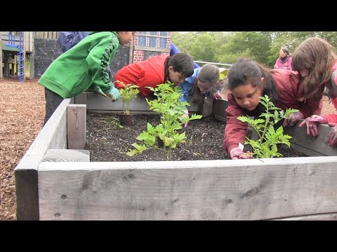 PCN Plymouth School Kids Grow Tomatoes with Sheriff Farm