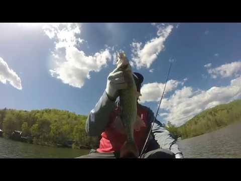 Lake Burton Georgia Chain Pickerel Are A Problem