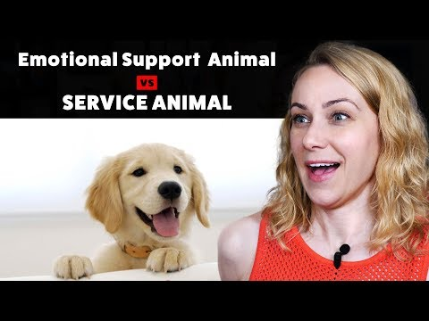 Emotional Support Animal or Service Animal: What's the difference?