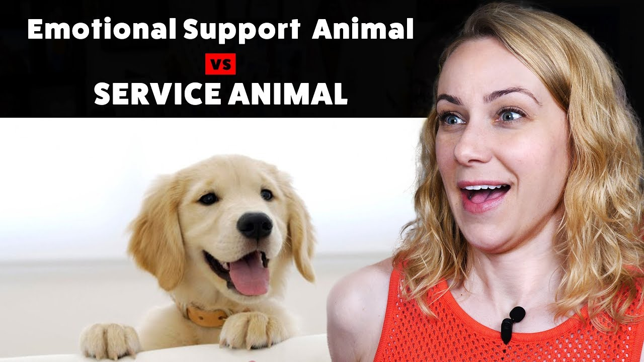 informative speech on service dogs