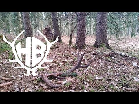 auf der Suche nach Abwurfstangen 2016 / shed hunting - Hunter Brothers