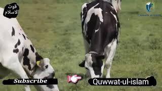 Kurbani karonga m to kurbani karonga(shahbaz khan