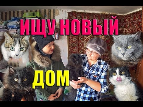 Кошки ищут хозяев Группа Верное сердце г Фокино Приморский край дальний восток