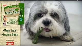 """""""Daily Routine"""" by Nutri Dent® Limited Ingredients Dental Chews Treats"""