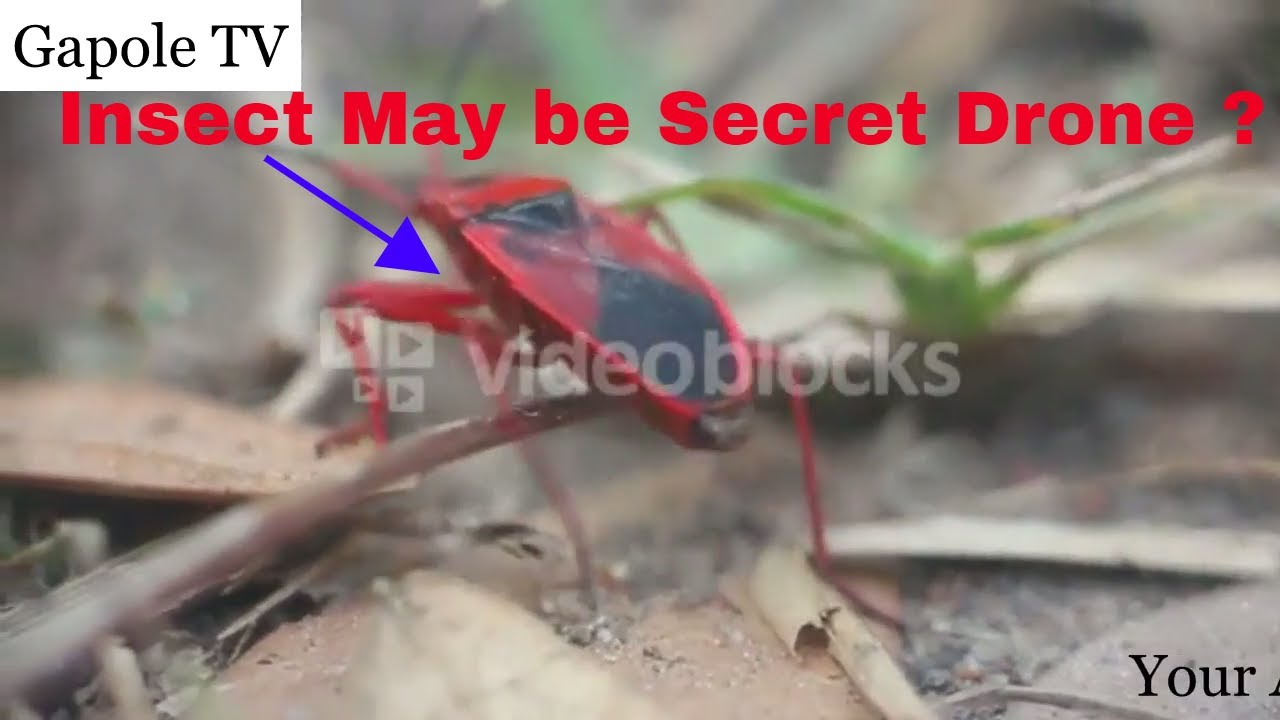 Secret Insect Spy Drones 2017