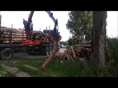 Prekladanie borovicového dreva - vlákniny
