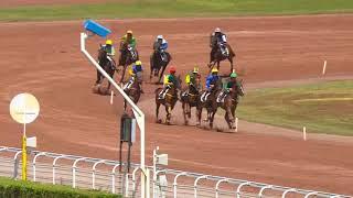 Vidéo de la course PMU PRIX DE LA PLACE SAINT-MICHEL
