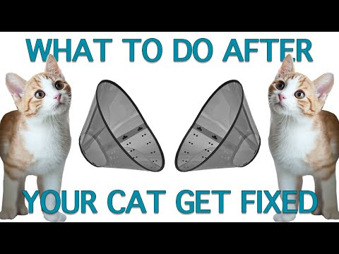 How To Care For Cats After Spay Neuter