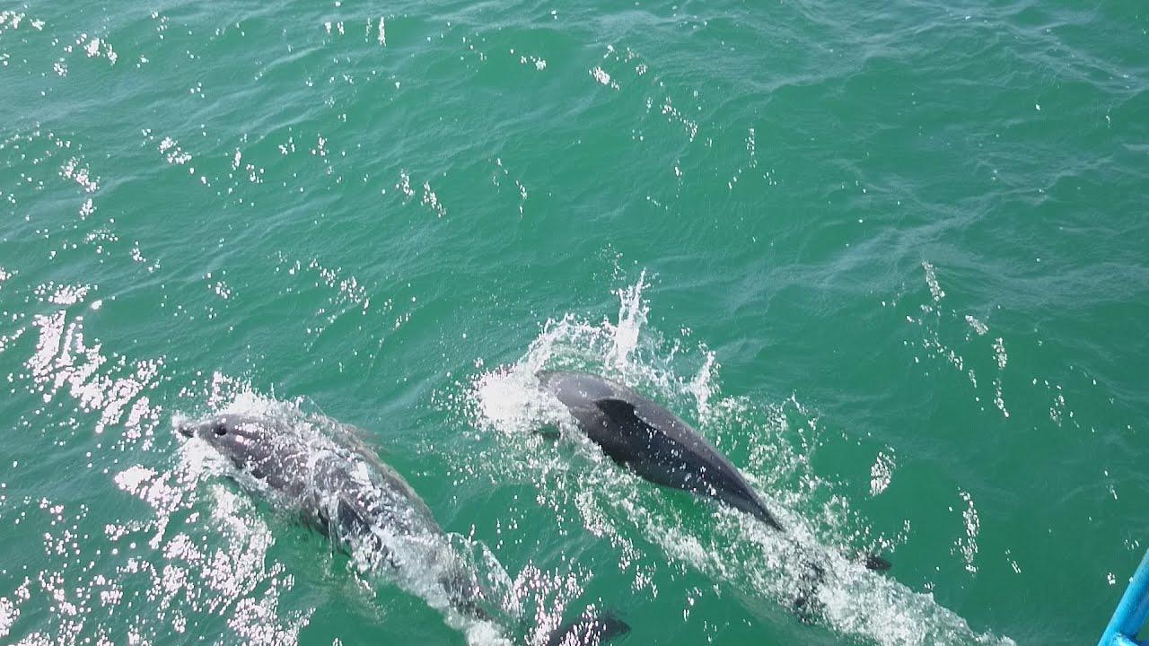 Скадовск. остров Джарылгач. Дельфины в черном море. - YouTube