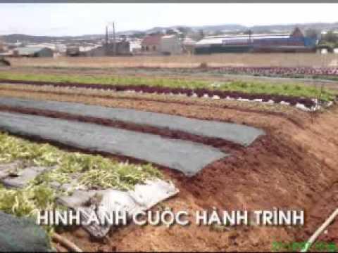Tham quan vườn rau Đà Lạt - www.rausach.com.vn