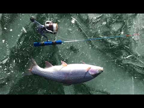 Ice Fishing Colorado- Antero And Eleven Mile Reservoir Trout- Chatfield Reservoir Bluegill And Geese