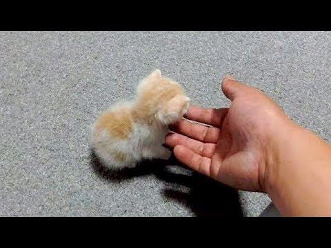 「猫かわいい」 すごくかわいい子猫 - 最も面白い猫の映画2018 #150