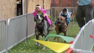 【サルのロデオ】 テキサス州のロデオ祭り。サルは大型犬に乗って参加で...