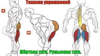 Мёртвая тяга. Тяга на прямых ногах. Румынская тяга. Правильный Бодибилдинг. Техника #19.0