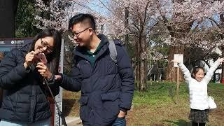 東京お花見散歩 上野公園の桜 2018.3.22  Ueno Park  Sakura thumbnail