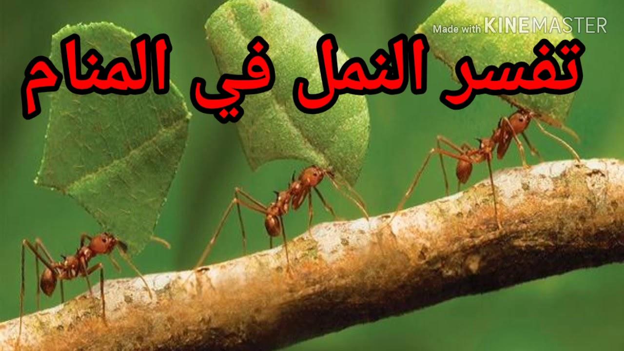رؤية النمل في المنام لابن سيرين تفسير الاحلام Tafsir Ahlam Youtube
