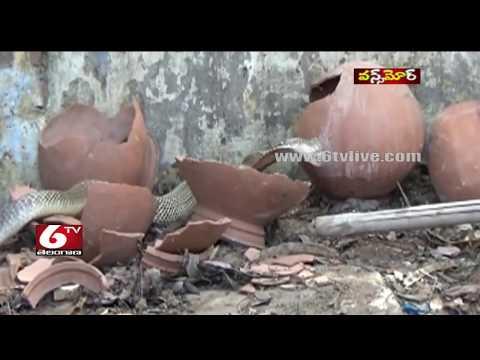 Snake Performance in Warangal | Once More | 6TV Telangana