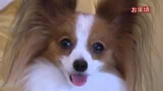愛くるしいペットの面影を映像化にしたサンプルです。最近は、人のご葬...