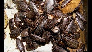 как избавиться от тараканов (муравьев и других насекомых)