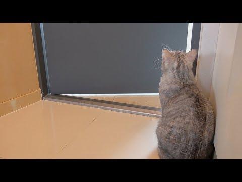 고양이를 혼자 두고 나가면 생기는 일