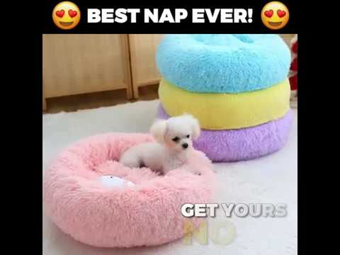want-to-give-your-pet-the-comfiest-bed?