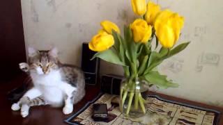 Кошка Баська нюхает тюльпаны_Воронеж