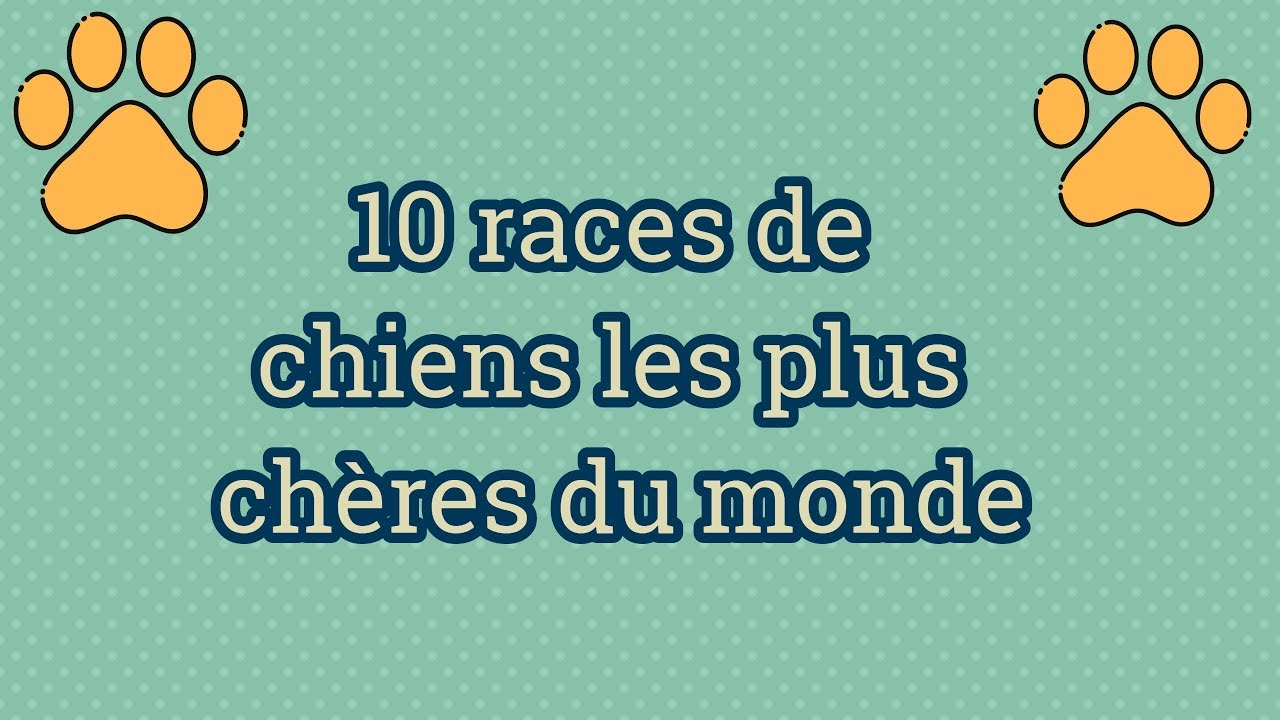 10 races de chiens les plus ch res du monde les chiens qui ont tr s cher youtube. Black Bedroom Furniture Sets. Home Design Ideas