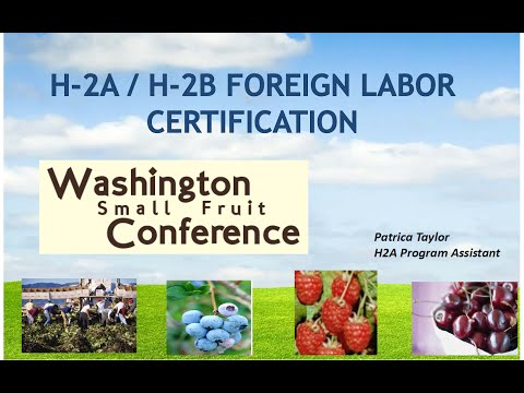 H-2A/H-2B Foreign Labor Certification, Patricia Taylor wafla