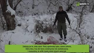 Wilki żywią wiele zwierząt