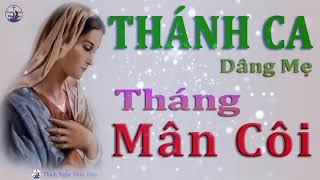 NHC THNH CA DNG M MN CI HAY NHT 2019