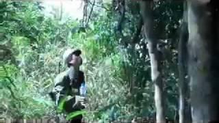 Trip to visit old tea trees in Laos