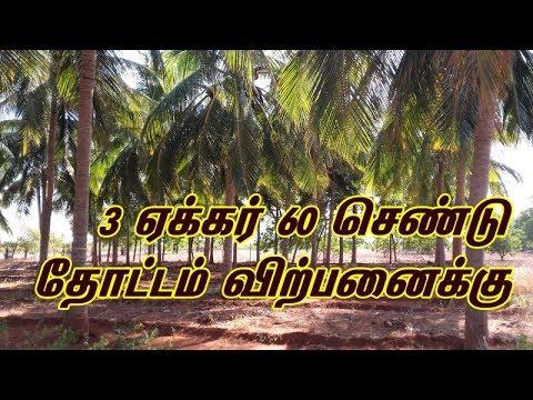 Agricultural land for Sale in Tirunelveli Dt