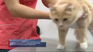 Ветеринары рекомендуют владельцам чипировать домашних животных