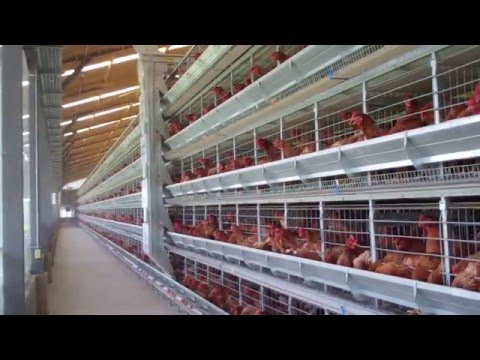 Alaso - Layer and Pullet Cage Systems (ENGLISH)