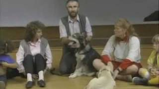 Children & Biting - Sirius Puppy Training Classic