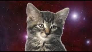 Кошачья песня!