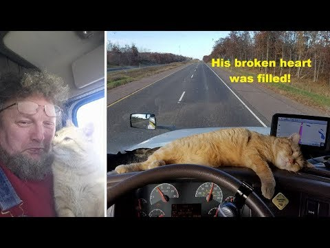 Heather Burnside - Paw Purr Azzi: Lonely Truck Driver Adopts Abandoned Stray Cat