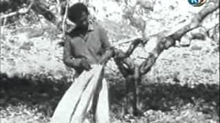 Hassan Aden Samatar - Heeso Xul Ah