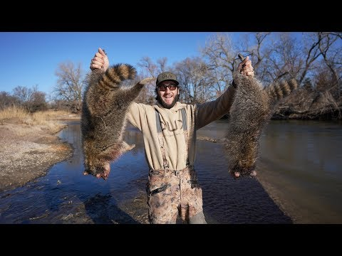 Trapping Public Land Raccoons On The River!!