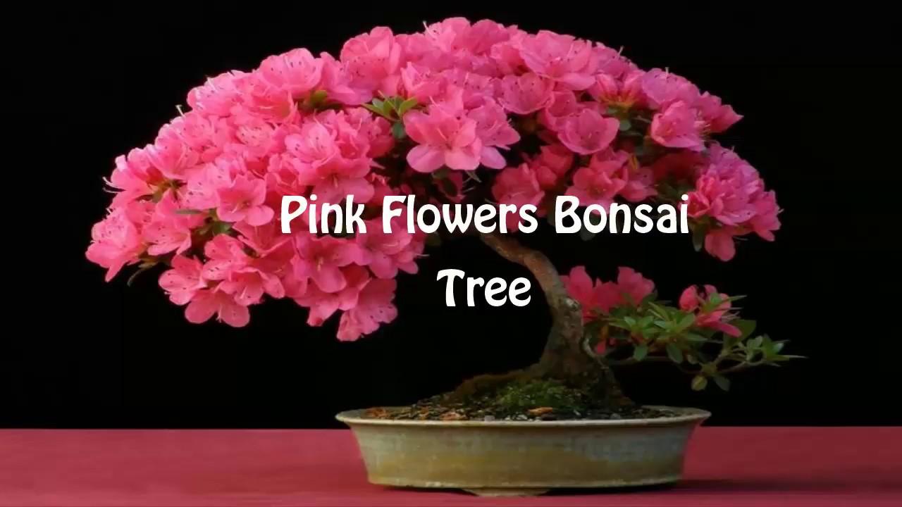 Pink Flowers Bonsai Tree Youtube