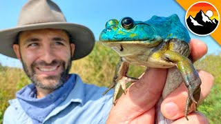 BLUE FROG CAUGHT! - Genetic Mutant!